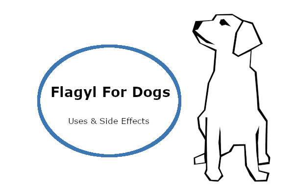 Read more about the article Flagyl for dogs: Uses, Dosage & Side Effects