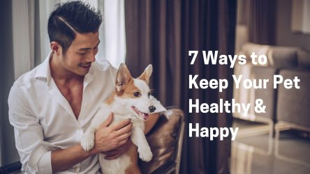 7 Ways to Keep Your Pet Healthy & Happy