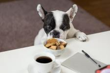 Top 10 toxic foods for dogs