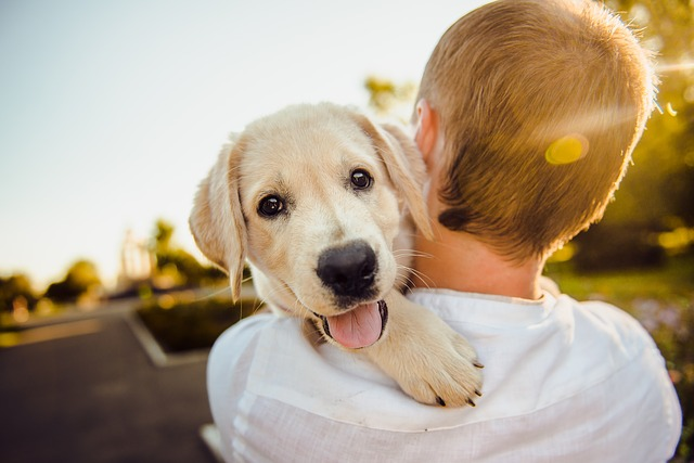 How to take care of a puppy