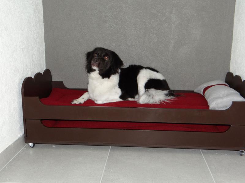 .:PET CENTRAL:. Hotel Canino. Hotel para Perros. Hotel para Mascotas. Hotel Canino en df. Hotel para Perros en la Condesa