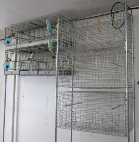 canaries welded wire cages