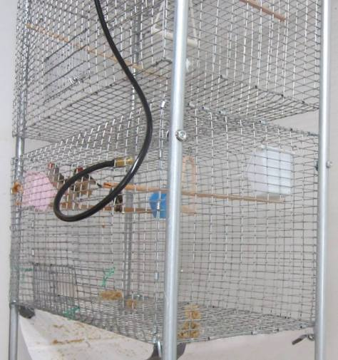 zebra finches welded wire cages