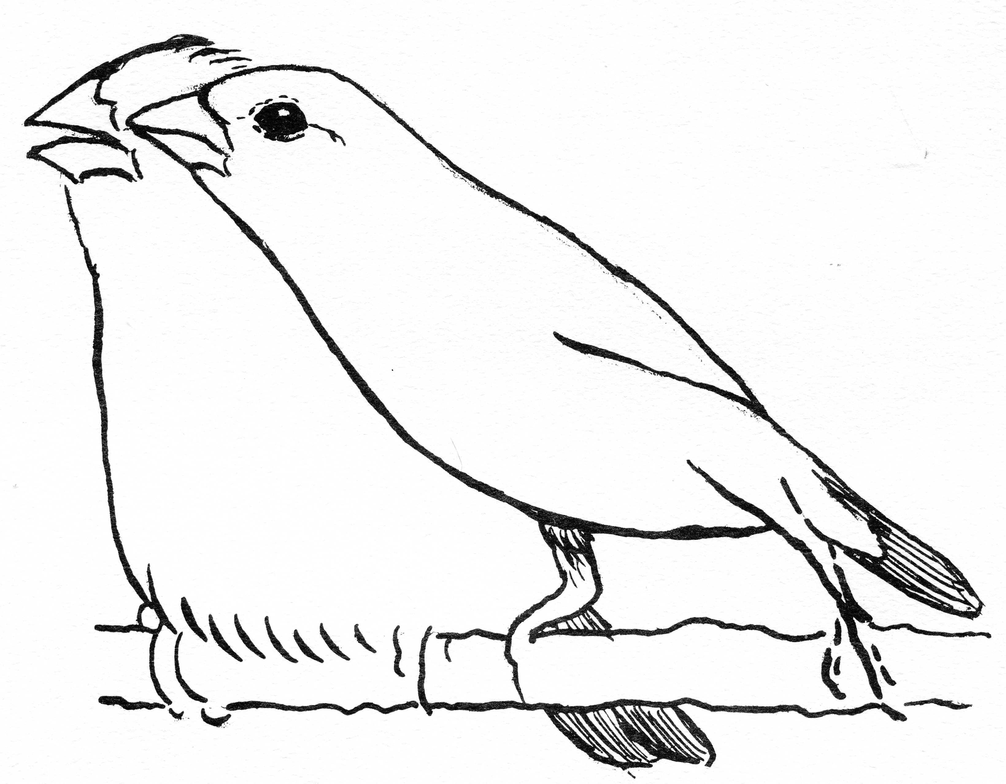 BEHAVIOR GENETICS STUDIES WITH BIRDS