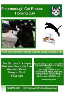 Peterborough Cat Rescue Homing Day
