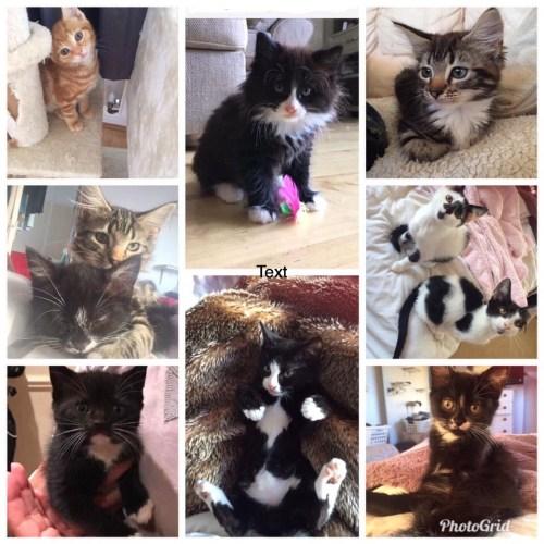 Kittens needing kitten food