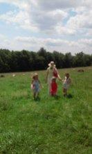 150710_farm_sheep1o