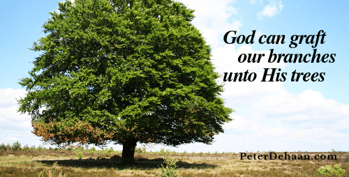 Are You Grafted Unto God's Family Tree?