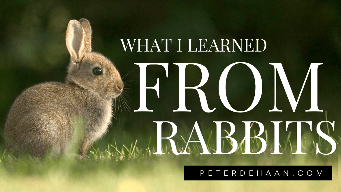 What I Learned From Rabbits