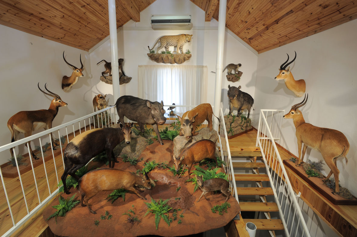 Trophy Room  Peter Flack  hunter writer conservationist