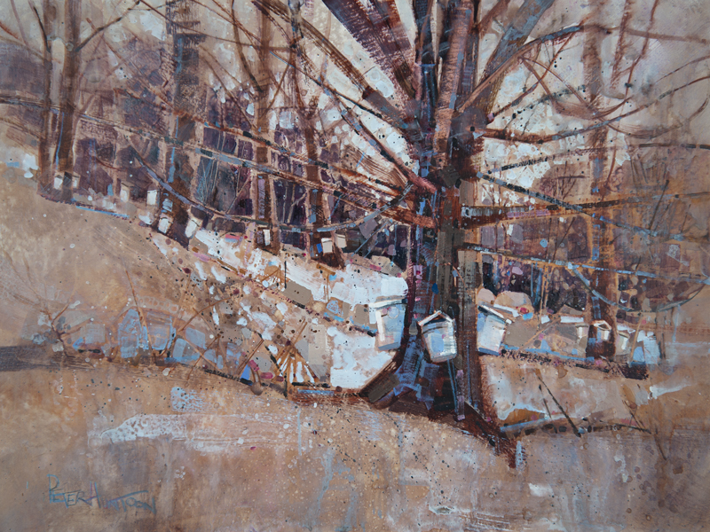 A Day in Vermont: Maple Grove - Sugar Maple by Peter Huntoon