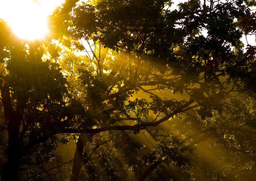 Solinslag genom lövverk en höstmorgon - Peter Klint