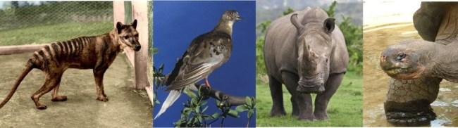 four extinctions
