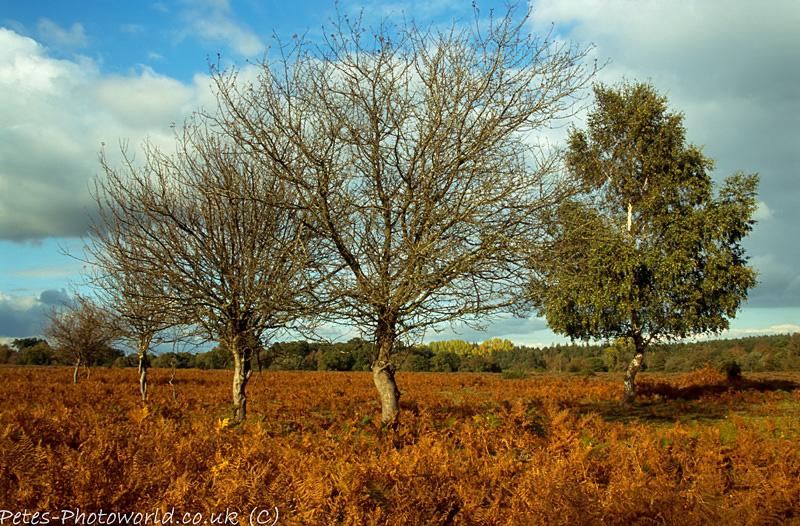 Tree Line Up at Matley Wood