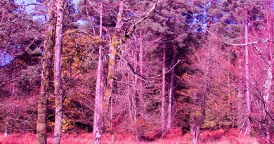 Woodland scene with purple filter