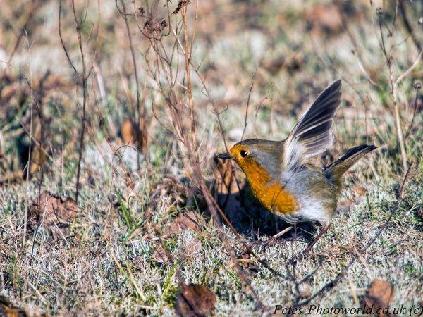 Robin hopping