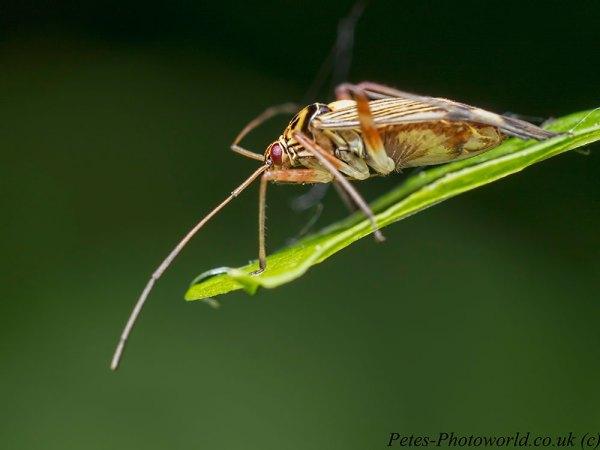 Plant Bug profile
