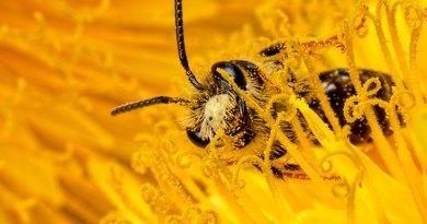 Pollen overdose