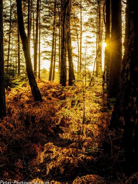 Light up the pine