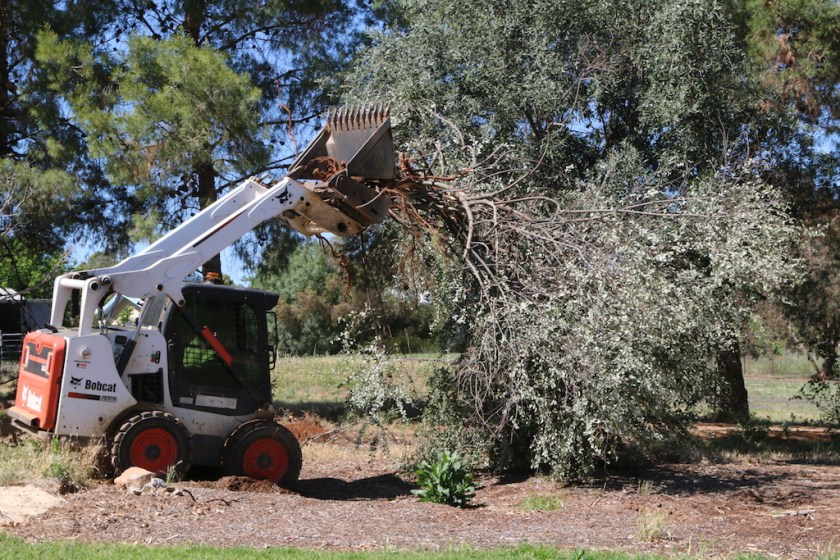 Image 2017.4990: A large shrub was easily removed by the bobcat, clearing the future right-of-way.