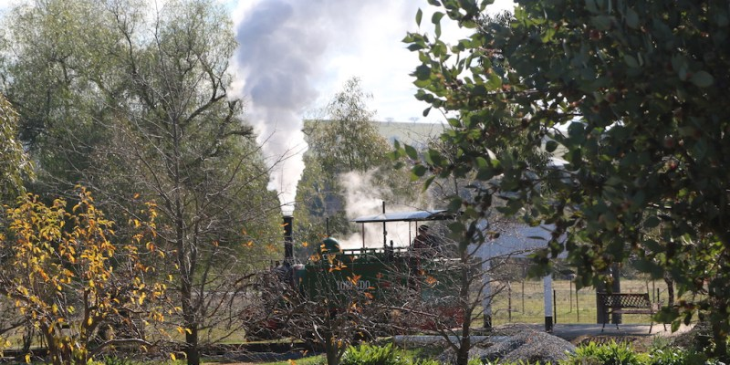 Image 2017-3273: Our Hunslet steam locomotive, Torpedo, viewed through the foliage at Pete's Hobby Railway, NSW, Junee.