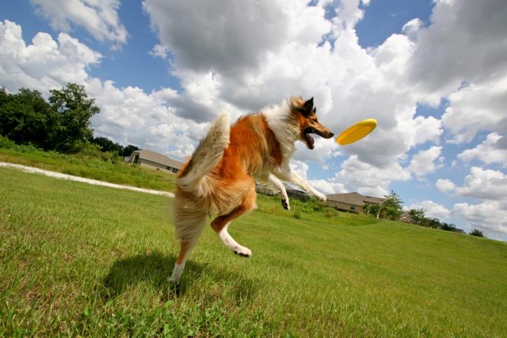 3 comportamentos curiosos dos cachorros e suas explicações científicas