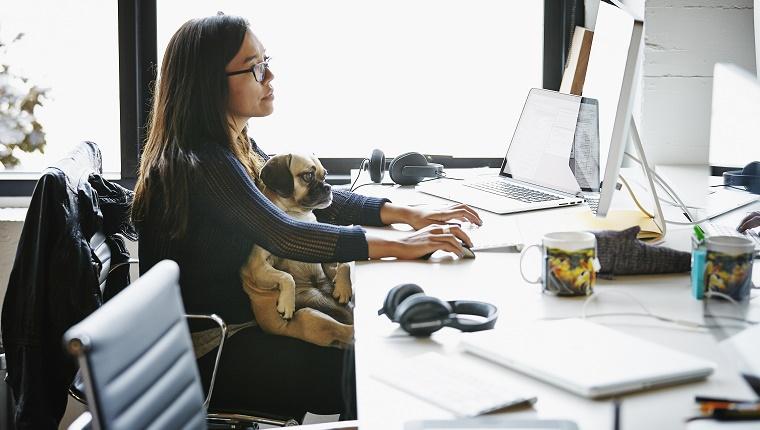 Ação leva cães e gatos para o escritório e diminui stress no escritório