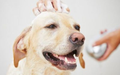 Com que frequência devemos dar banho em cachorros?