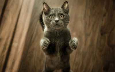 10 fatos que você não sabia sobre os gatos