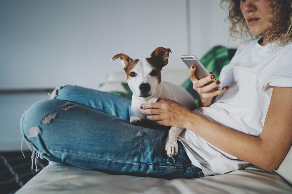 Cães podem ficar deprimidos quando donos usam celulares em excesso