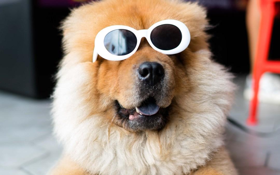 5 coisas que os cães não suportam que os humanos façam