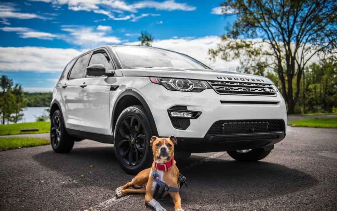 Dicas para um passeio de carro mais seguro com seu cão