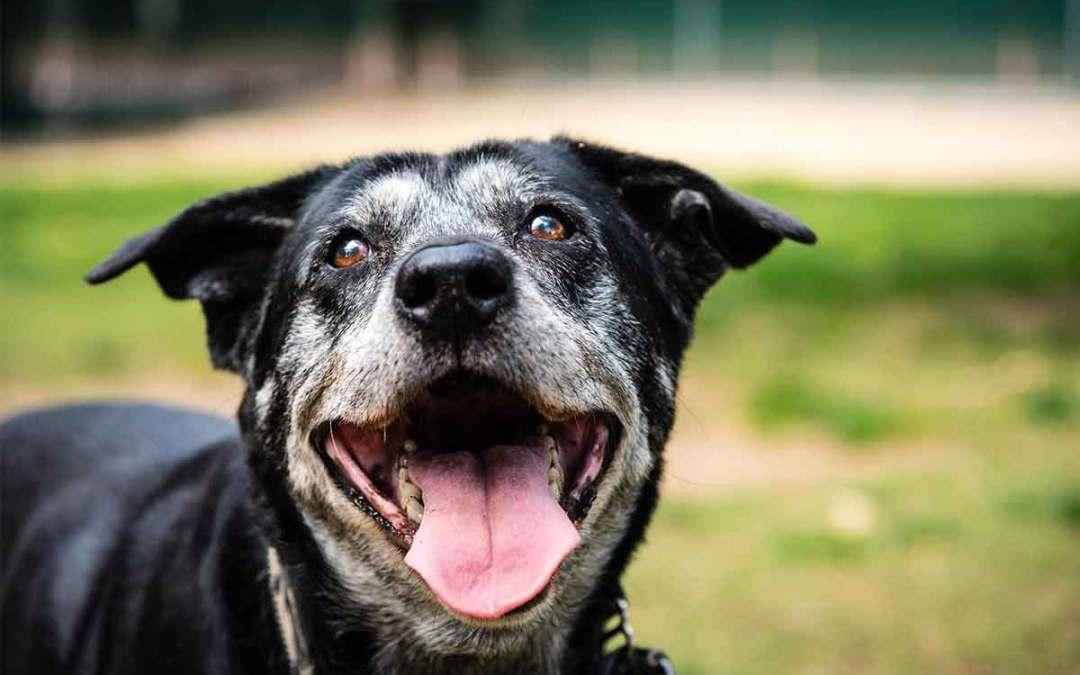 Cachorros mudam a personalidade com o passar dos anos?