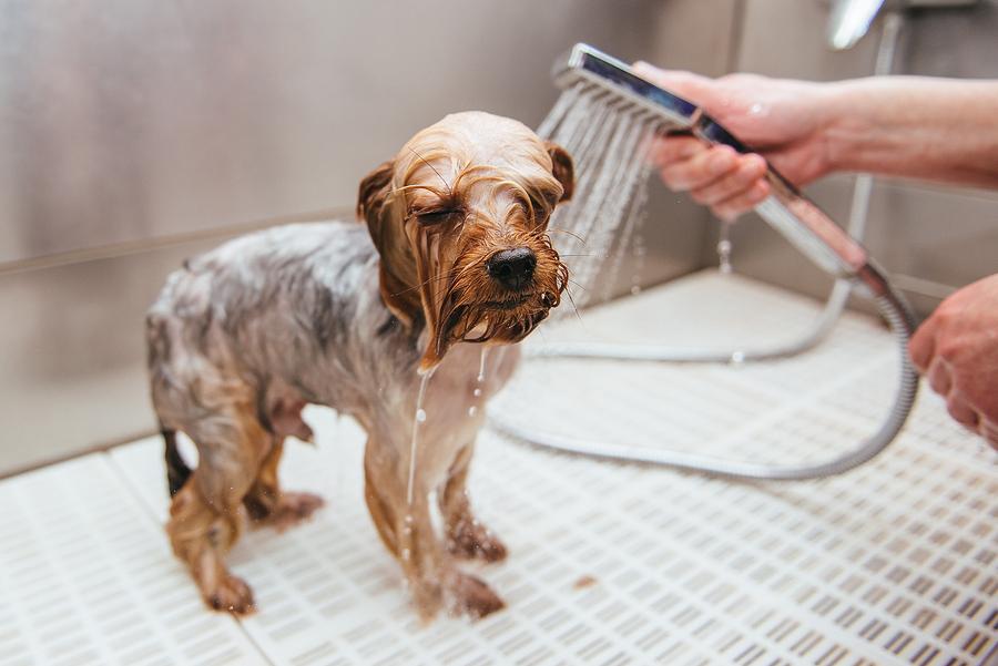 Como escolher um bom banho e tosa para levar meu pet?