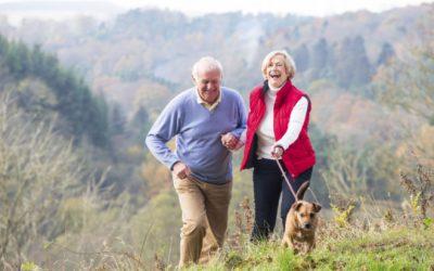 Como os cães podem manter você saudável