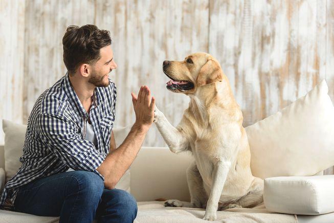 Novo estudo mostra o quanto seu pet influencia você (e muito!)