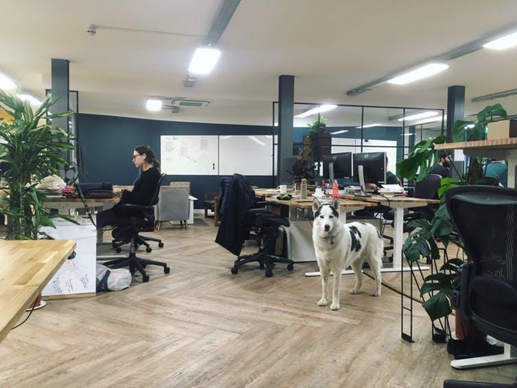 Mais empresas estão se tornando dog friendly