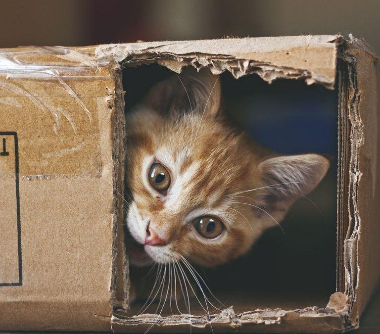 10 fotos de gatos que vão fazer seu dia melhorar