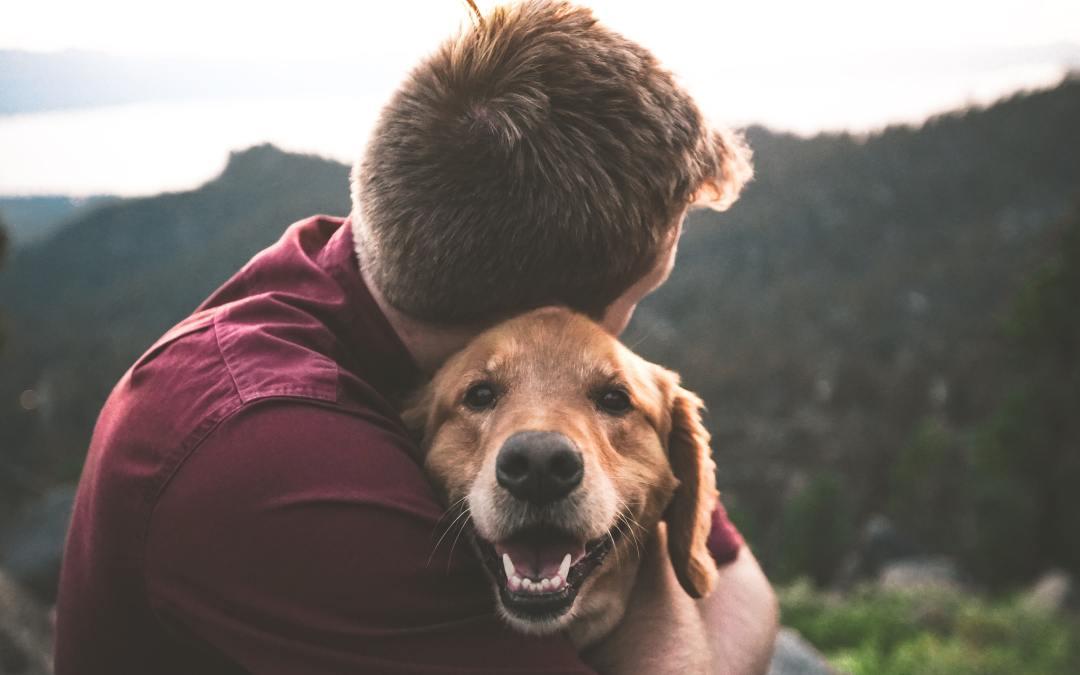 Conheça as vantagens de adotar um cão adulto