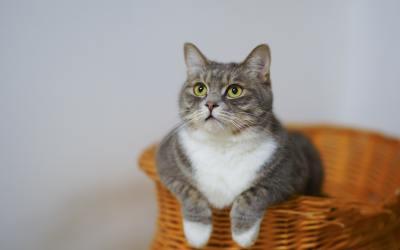 Piscar devagar pode ajudar você a se aproximar de um gato