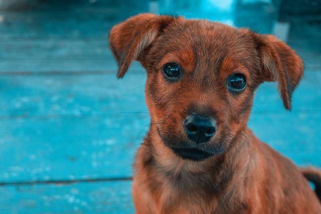 São Paulo tem parque indoor para cachorros