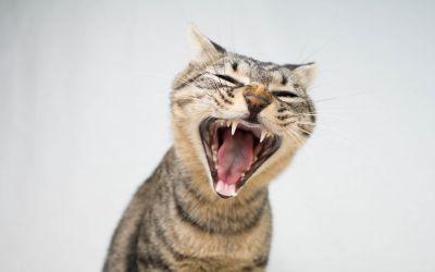 Motivos que podem estressar seu gato