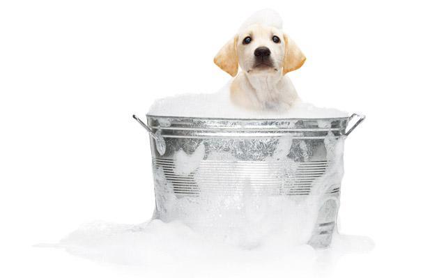 Il primo bagno del cucciolo cani
