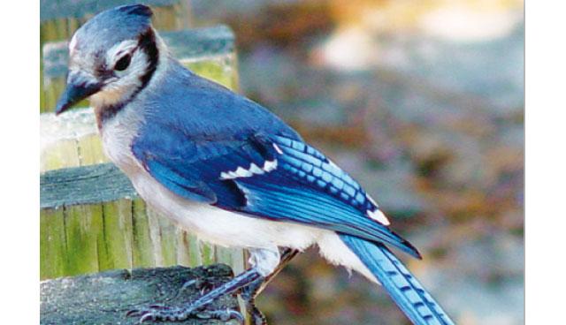 La temperatura corporea degli uccelli uccelli