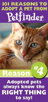 Petfinder: 101 Reasons to Adopt ... pets know what to say