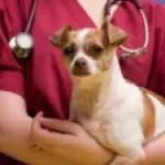 billboard-pet-insurance