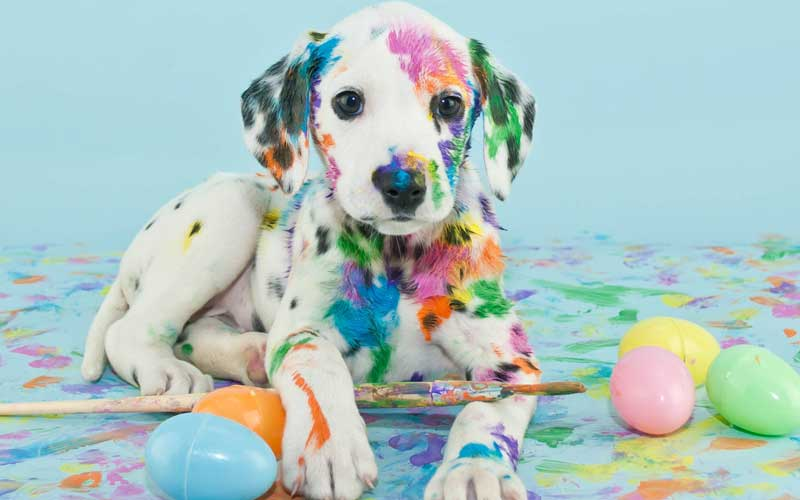 Picture of Dalmatian and Easter Eggs