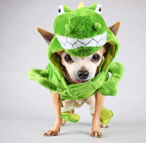 Picture of dog in a Halloween costume