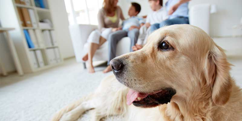 Picture of dog in the living room with his family