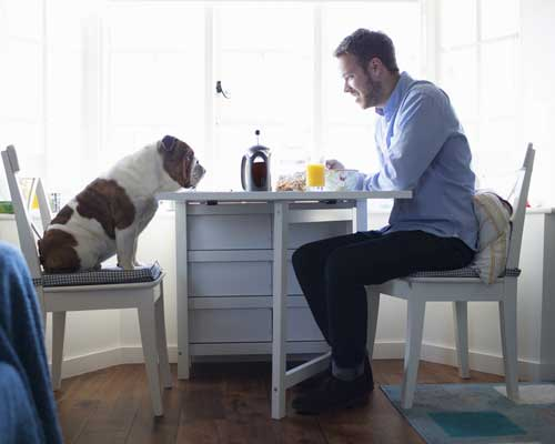 Picture of a dog sitting at the table